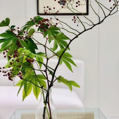 PLANT イメージ
